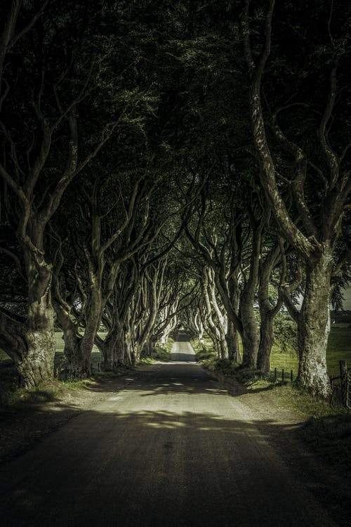 Fotobanka sbezplatnými fotkami na tému cesta, severné írsko, stromy, zelená