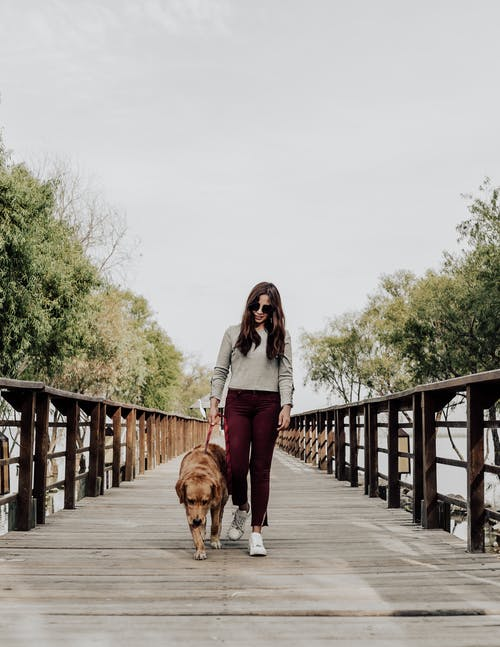 Foto stok gratis anjing, berambut cokelat, berjalan, berjalan anjing