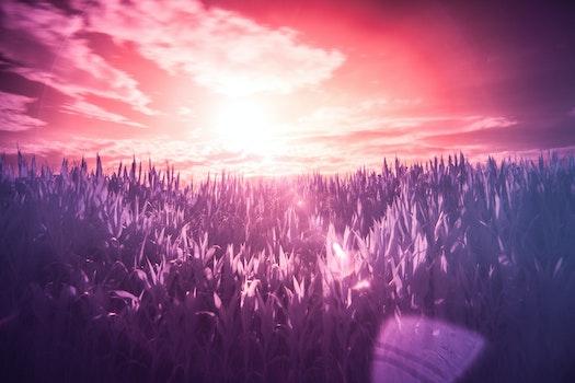 Free stock photo of red, sun, purple, dream