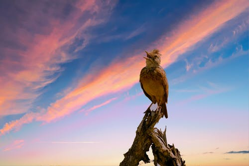 Low Angle Photo of Brown Bird Perch on Driftwood