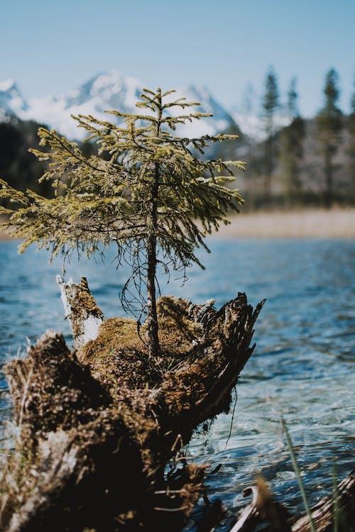 Ilmainen kuvapankkikuva tunnisteilla heijastus, järvi, kaunis, kesä