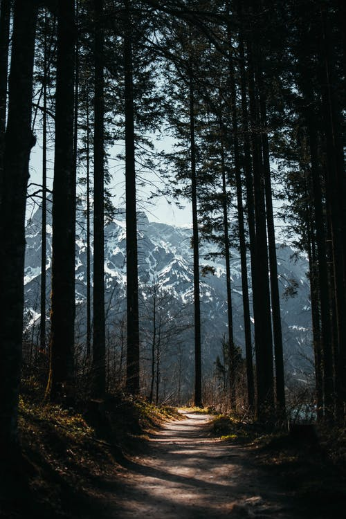 Gratis stockfoto met bomen, Bos, bossen, buiten