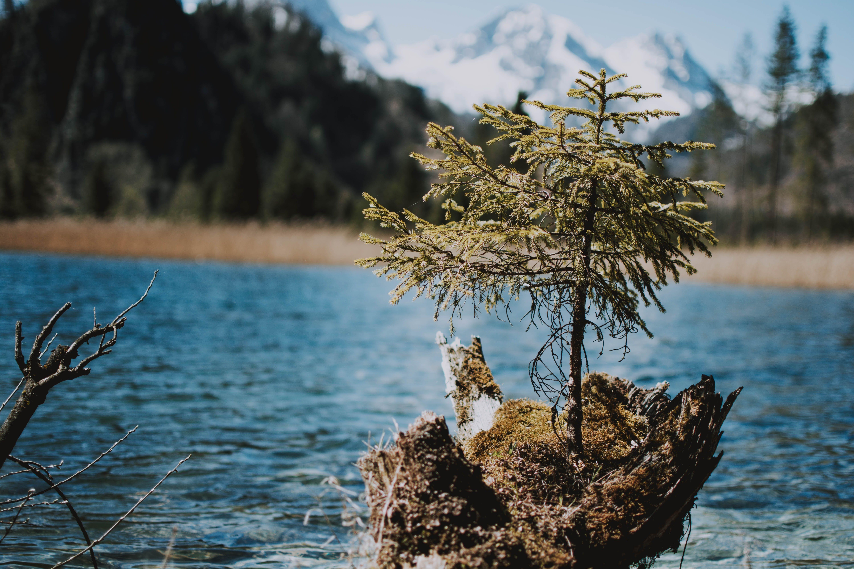 Gratis arkivbilde med årstid, dagslys, falle, grønn mos