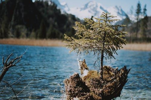 경치, 경치가 좋은, 계절, 공원의 무료 스톡 사진
