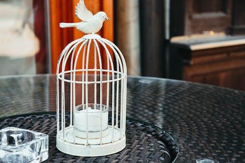 ケージ, 小鳥小屋, 鳥かごの無料の写真素材