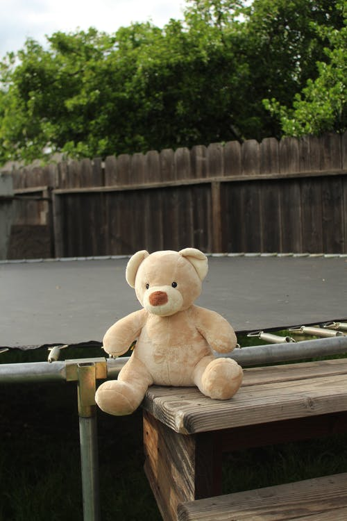 Free stock photo of bear, outside, teddy bear