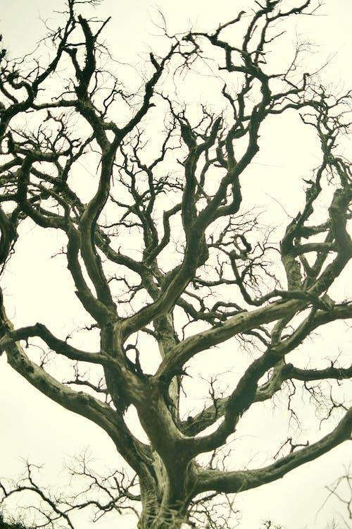 δέντρα, δέντρο, περιβαλλοντική προστασία