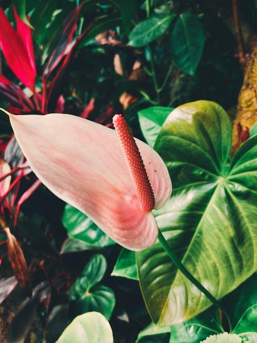 Ingyenes stockfotó háttér, levelek, liliom, lomb témában