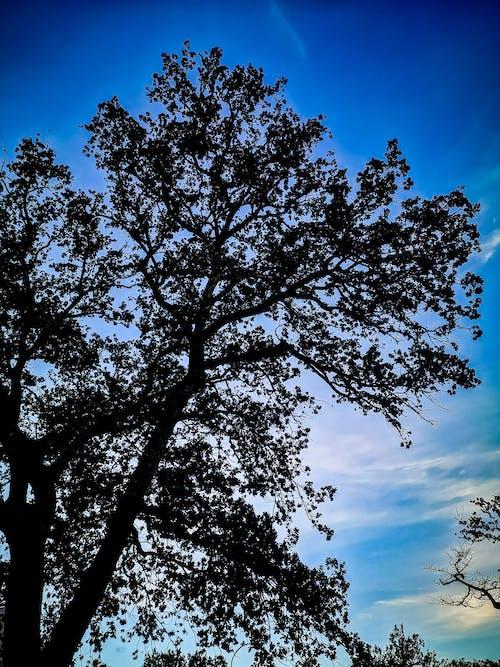 Ingyenes stockfotó árnyékok, fa, fekete, hatalmas fa témában