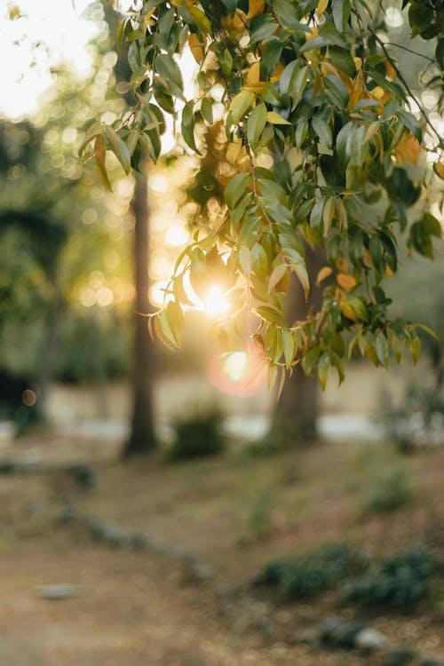 #outdoorchallenge, açık, açık hava, ağaç içeren Ücretsiz stok fotoğraf