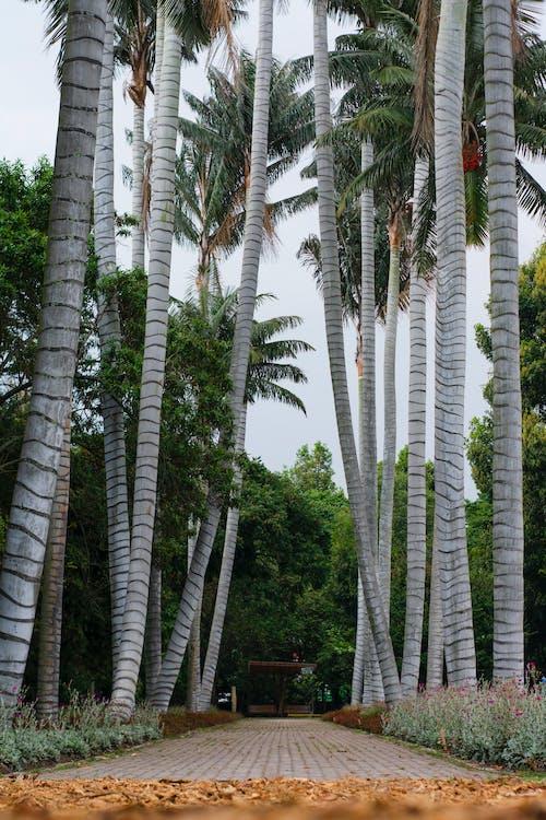 Kostenloses Stock Foto zu bäume, landschaft, palmen, pfad