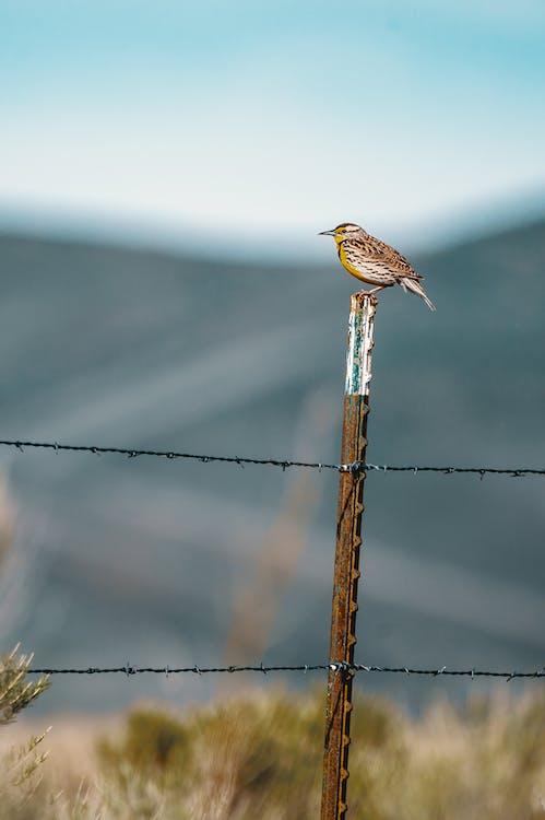 Brown Bird on Selective Focus Photography
