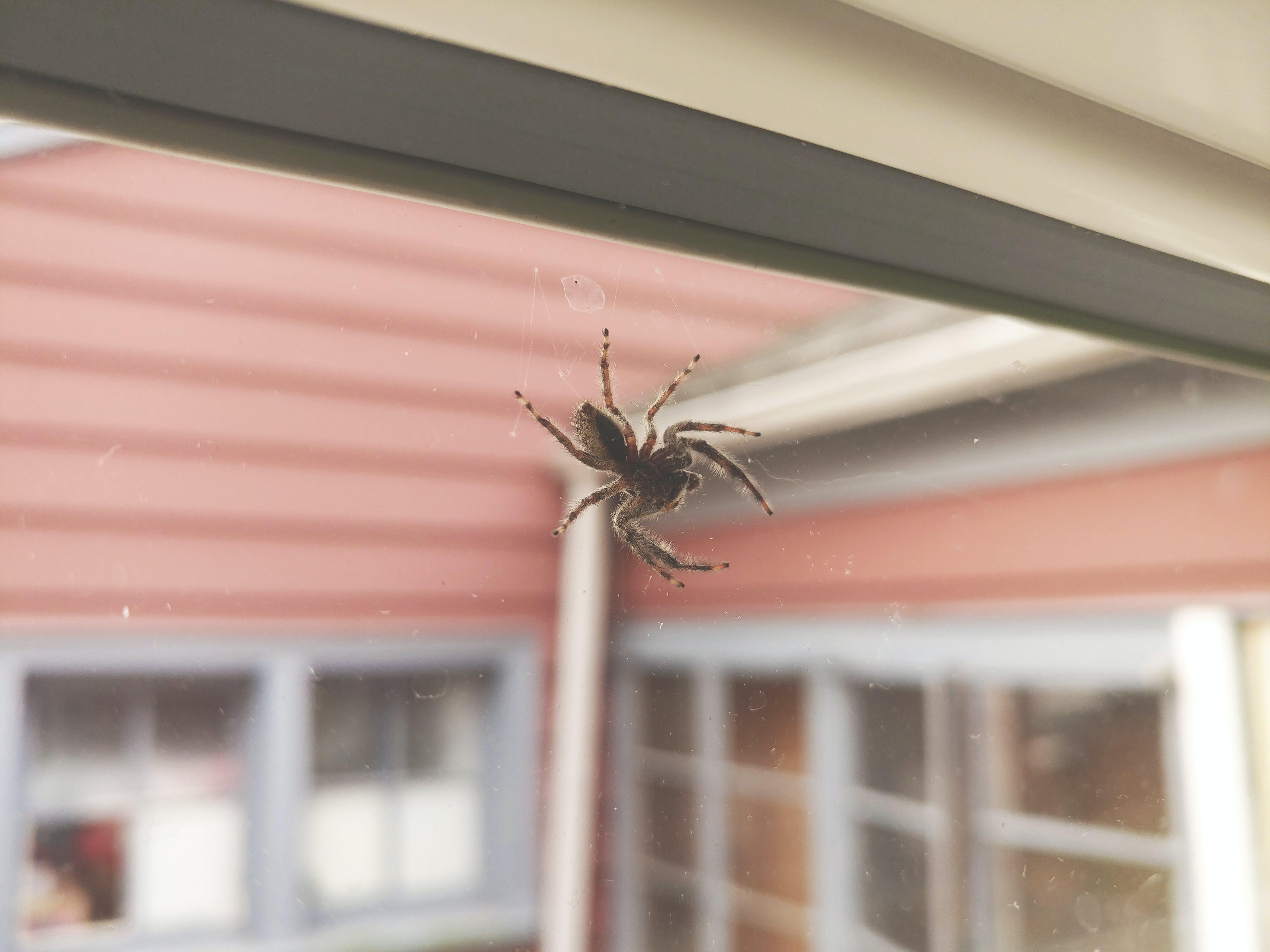 Free stock photo of arachnid, destroir, destroirphotography, jump