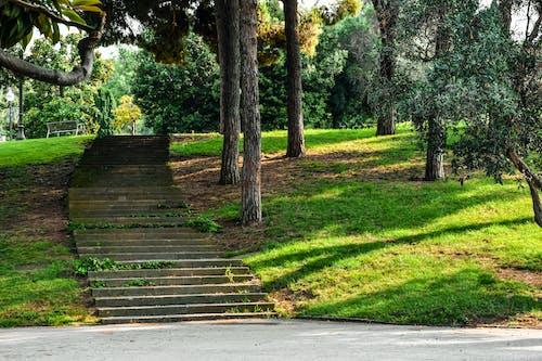 Základová fotografie zdarma na téma park, schody, zahrada