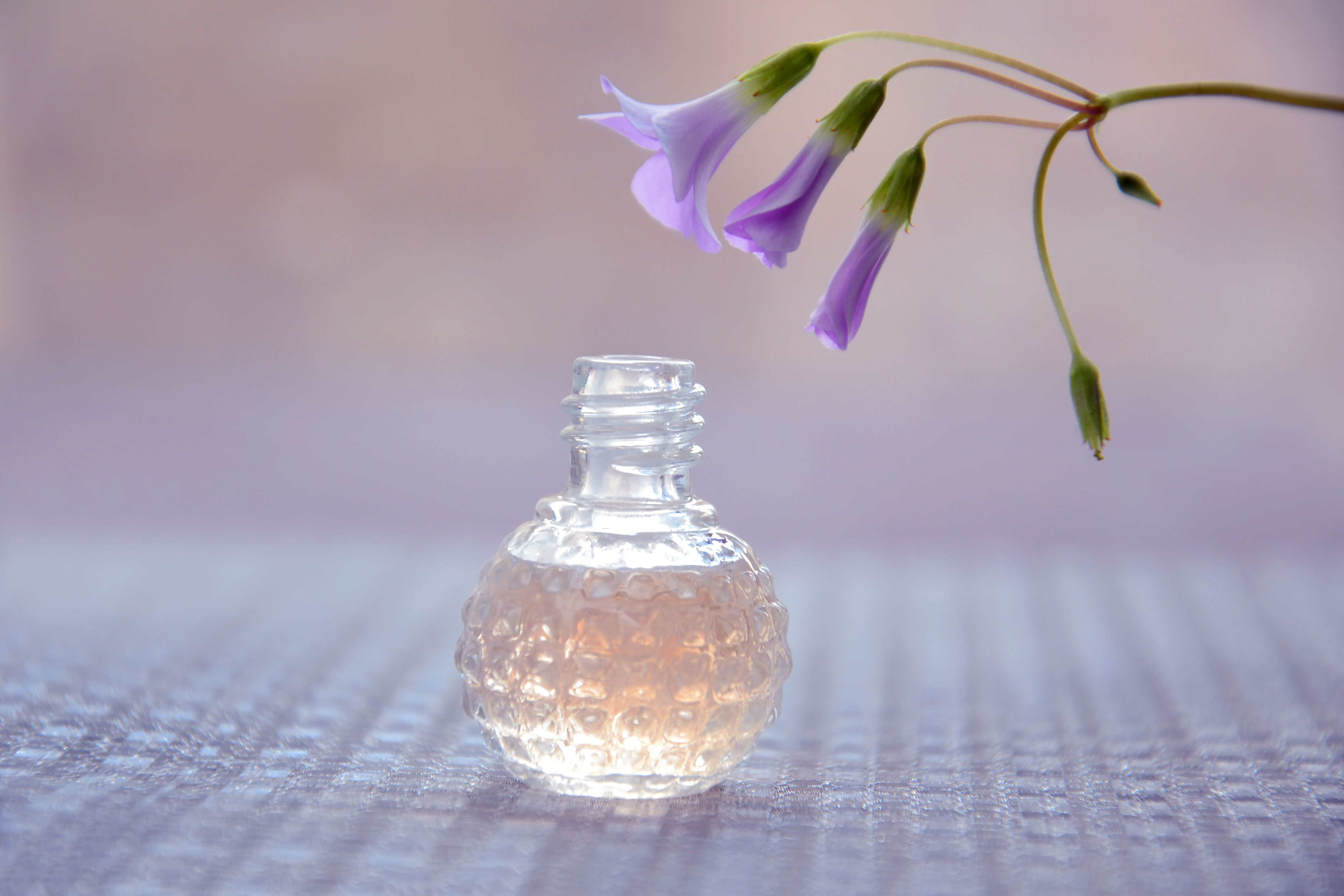 Free stock photo of aromatherapy, bottle, flowers