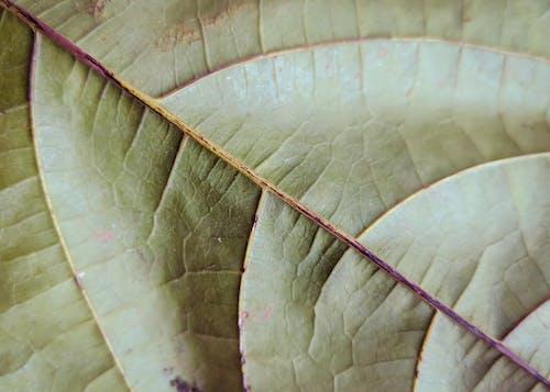 Fotobanka sbezplatnými fotkami na tému asymetria, čiara, list, príroda