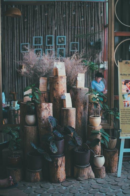 Ilmainen kuvapankkikuva tunnisteilla ajopuu, kasvit, kattilat, marketti