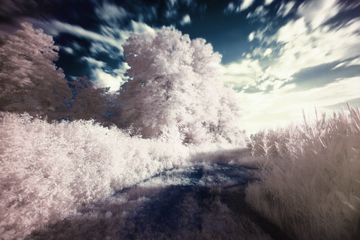 Free stock photo of dream, filter, infrared, surreal