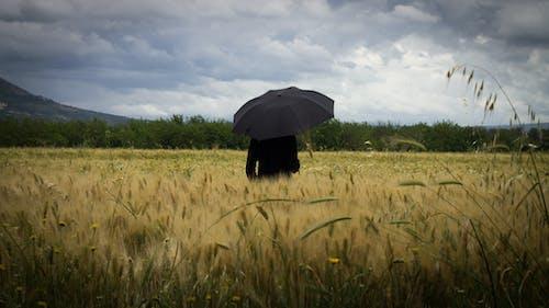 Fotos de stock gratuitas de #amarillo, naturaleza, nube, nubes