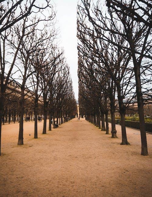 Ảnh lưu trữ miễn phí về cây, cung điện, điểm đến du lịch, versailles