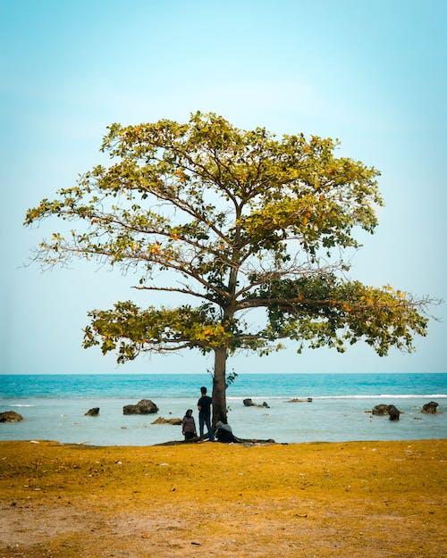 Ảnh lưu trữ miễn phí về bờ biển, cánh đồng, cây, đất