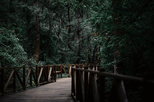 가을, 경치, 경치가 좋은, 공원의 무료 스톡 사진