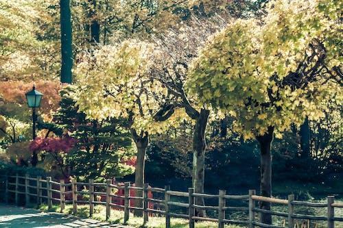 Gratis lagerfoto af hvile, moder natur, natur, træer