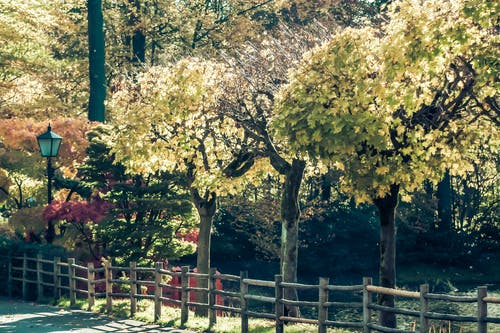 Foto stok gratis alam, ibu Pertiwi, istirahat, pohon