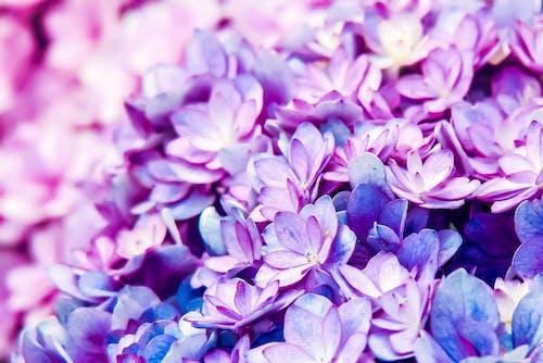Ảnh lưu trữ miễn phí về hoa, Hoa màu xanh, Thiên nhiên, thực vật học