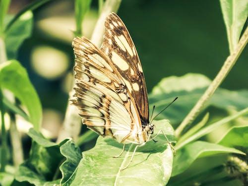 Ảnh lưu trữ miễn phí về Con bướm, côn trùng, màu xanh lá, vườn bách thú