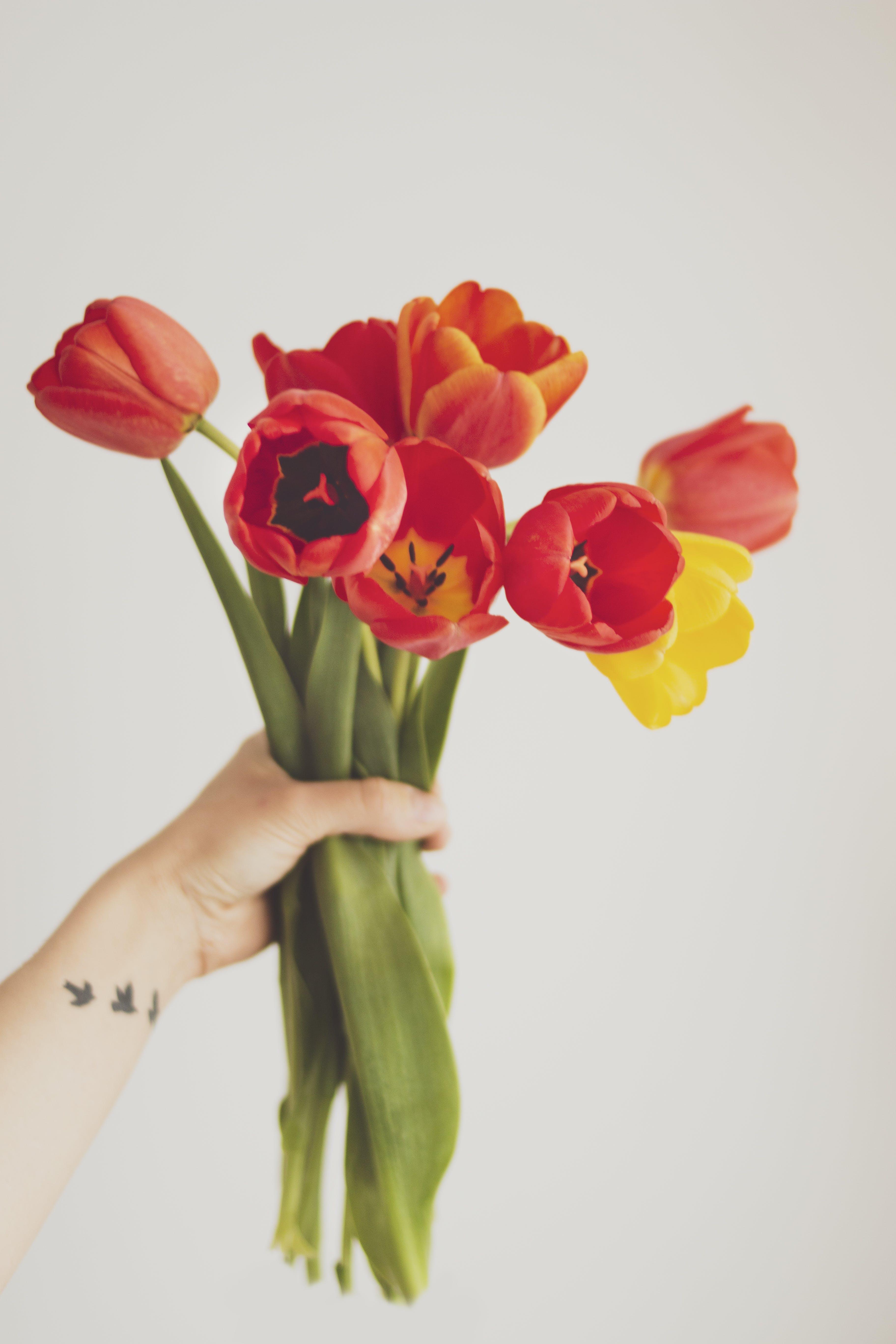 Foto d'estoc gratuïta de bonic, brillant, flora, flors