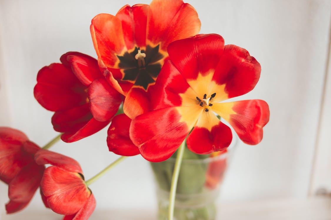 arranjament floral, bonic, brillant