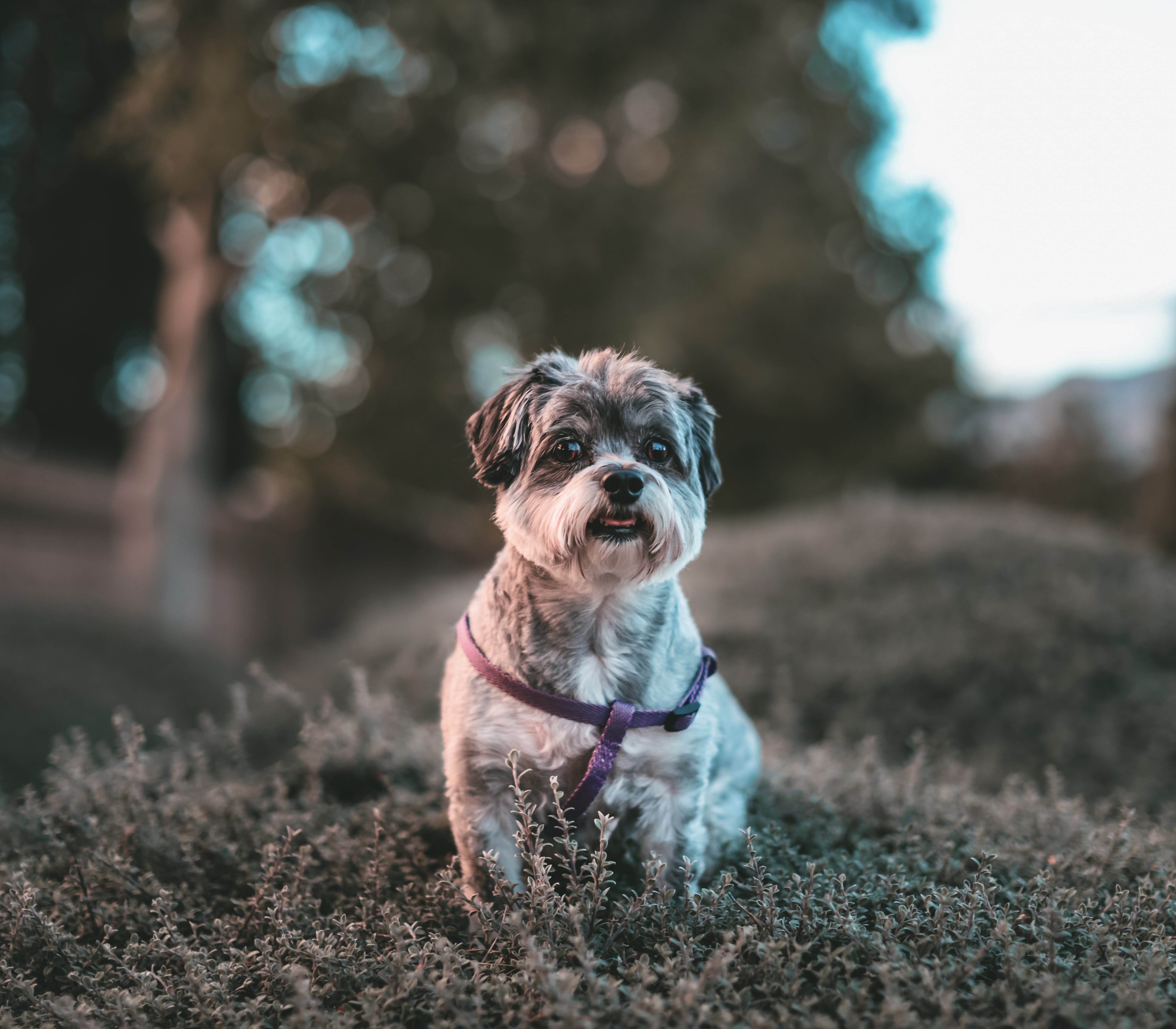 Fotos de stock gratuitas de adorable, animal, canino, fotografía de animales