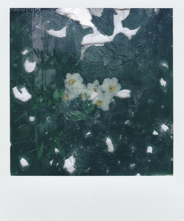 White-petaled Flowers Painting