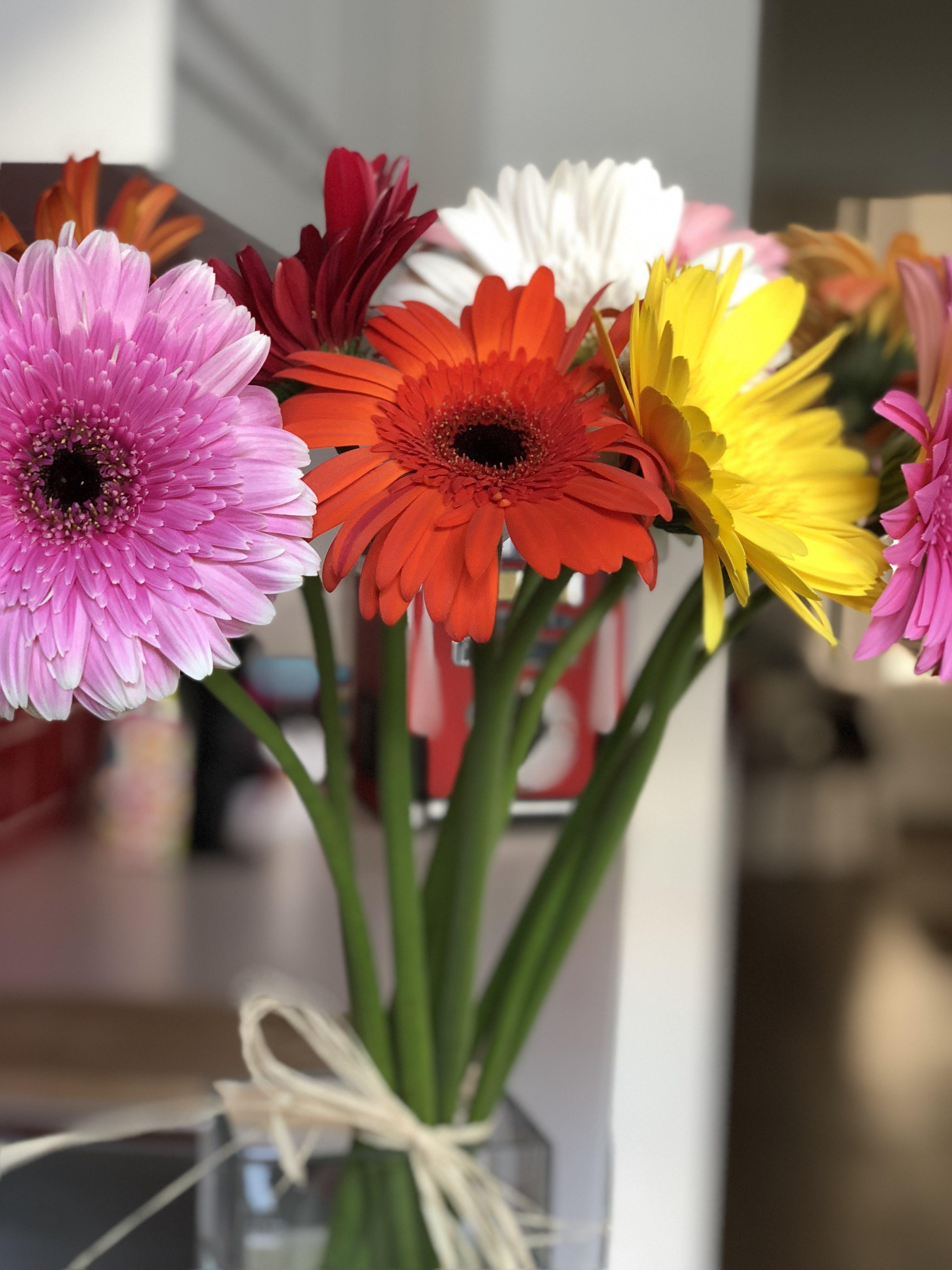 Δωρεάν στοκ φωτογραφιών με #mylove #boyfriend #flowers #love