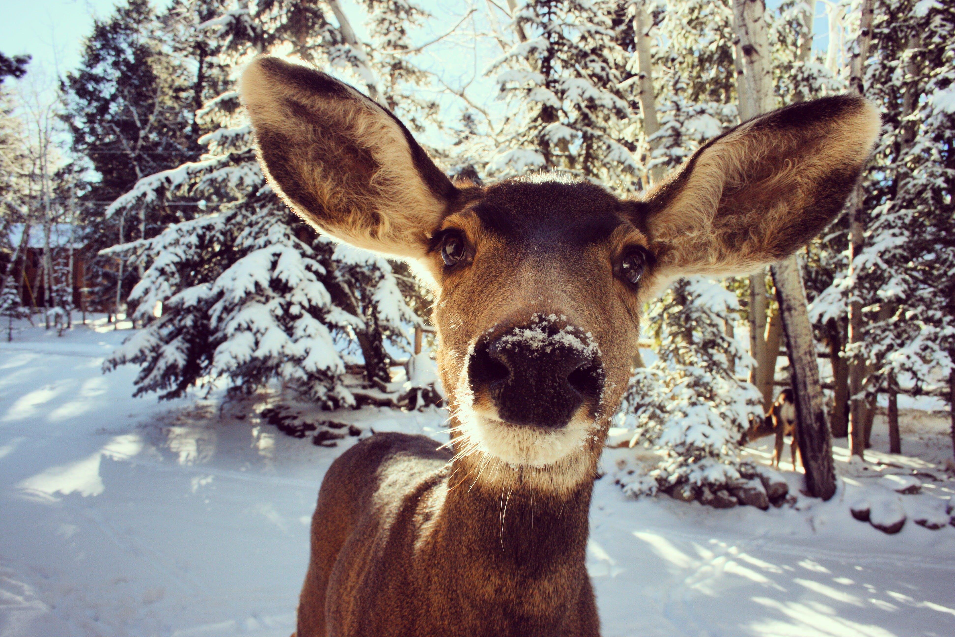 Kostenloses Stock Foto zu bäume, colorado, draußen, frost