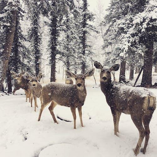 Δωρεάν στοκ φωτογραφιών με biches, neige, Αμερική, δέντρα