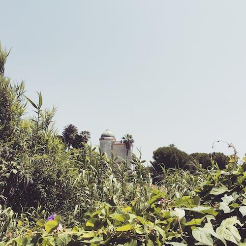 Δωρεάν στοκ φωτογραφιών με Ιταλία, κάστρο, οικία, πράσινος