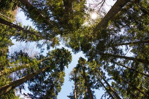 Photos gratuites de arbres, contre-plongée, environnement, espace extérieur