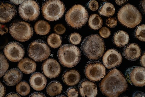 Free stock photo of brown, dead tree, dead trees, deforestation