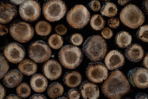 伐木, 倒下的樹, 原本, 堆積木材 的 免費圖庫相片