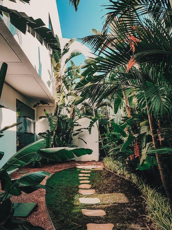 人行道, 室內植物, 小徑