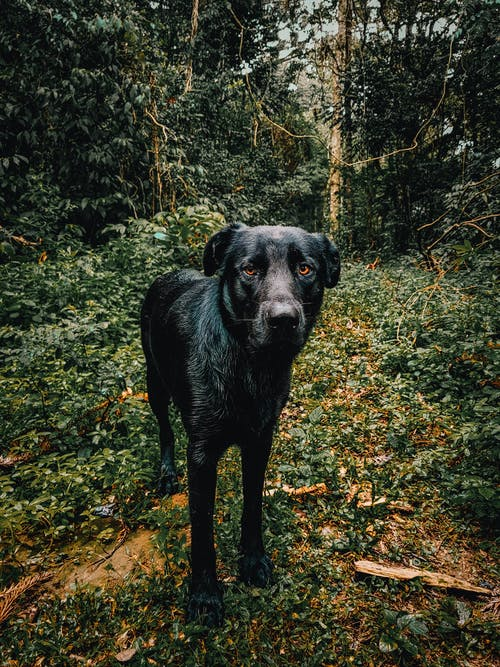 Black Dog Standing Near Trees