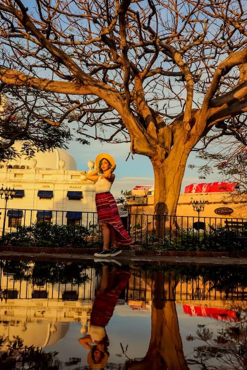 反射, 女人, 樹, 水坑 的 免費圖庫相片
