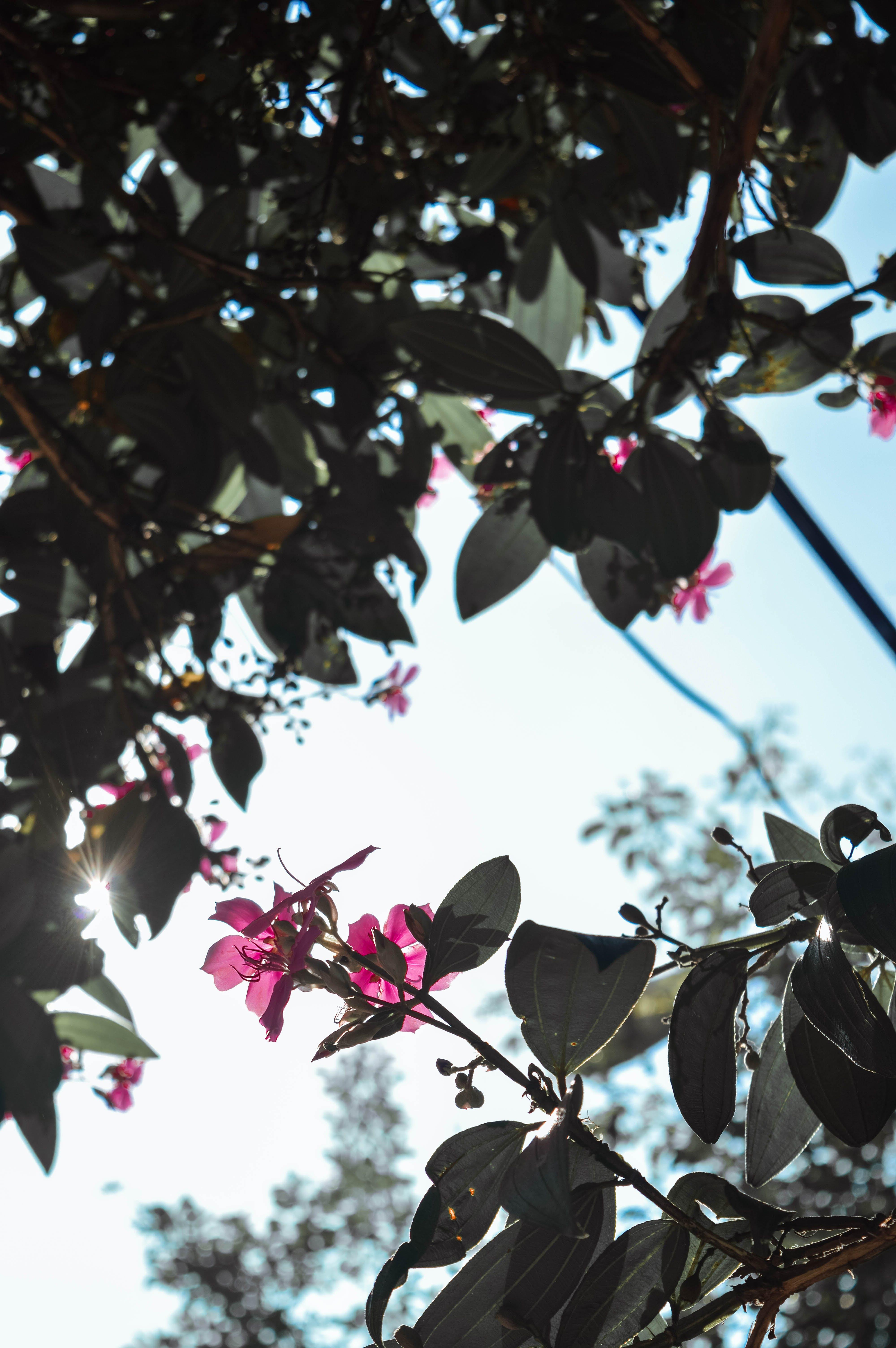 คลังภาพถ่ายฟรี ของ ดวงอาทิตย์, ดอกไม้, ดอกไม้ฤดูใบไม้ผลิ, ดอกไม้สวย