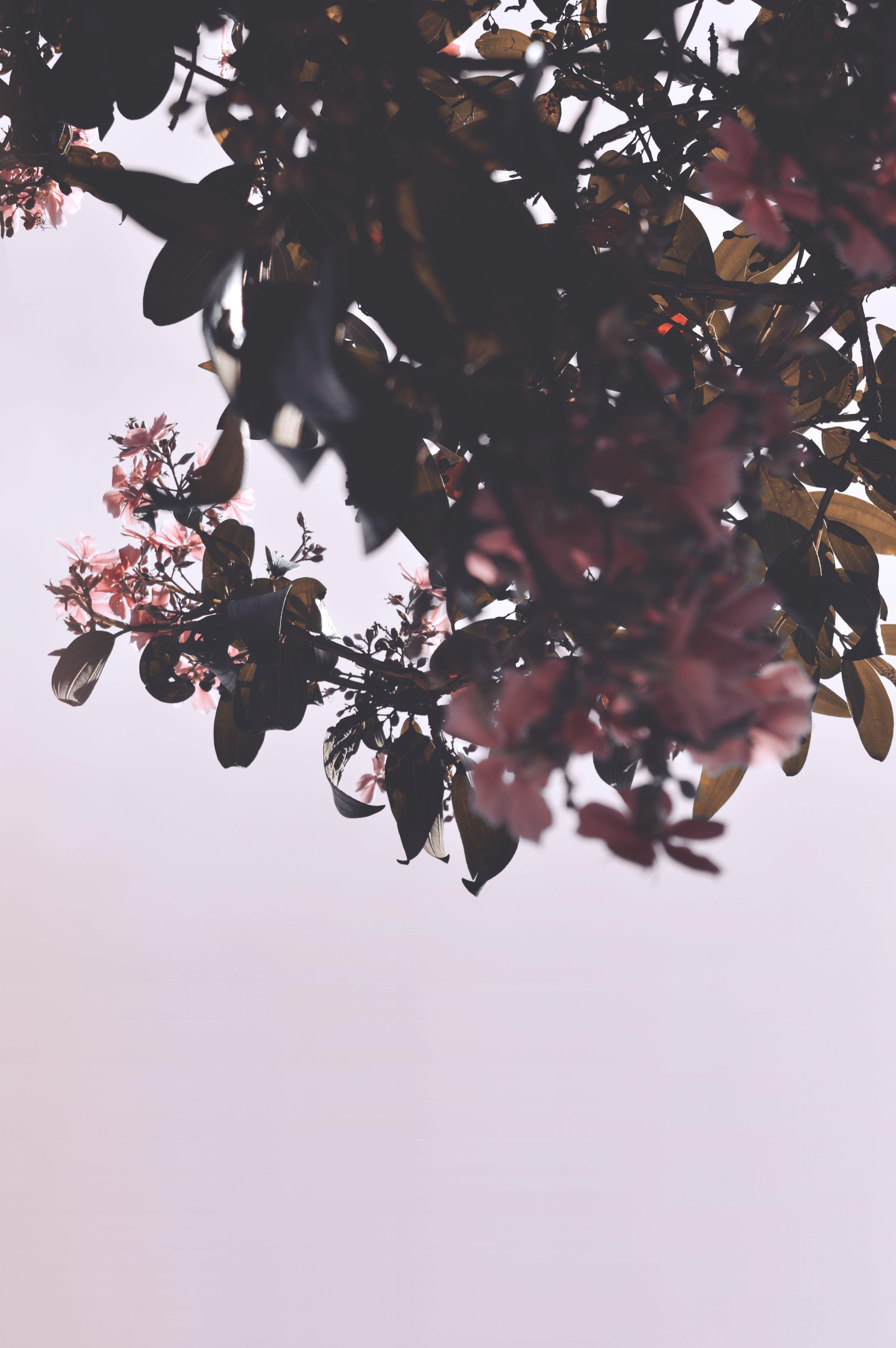 คลังภาพถ่ายฟรี ของ กิ่ง, ดอกไม้, พฤกษา, ฤดูกาล