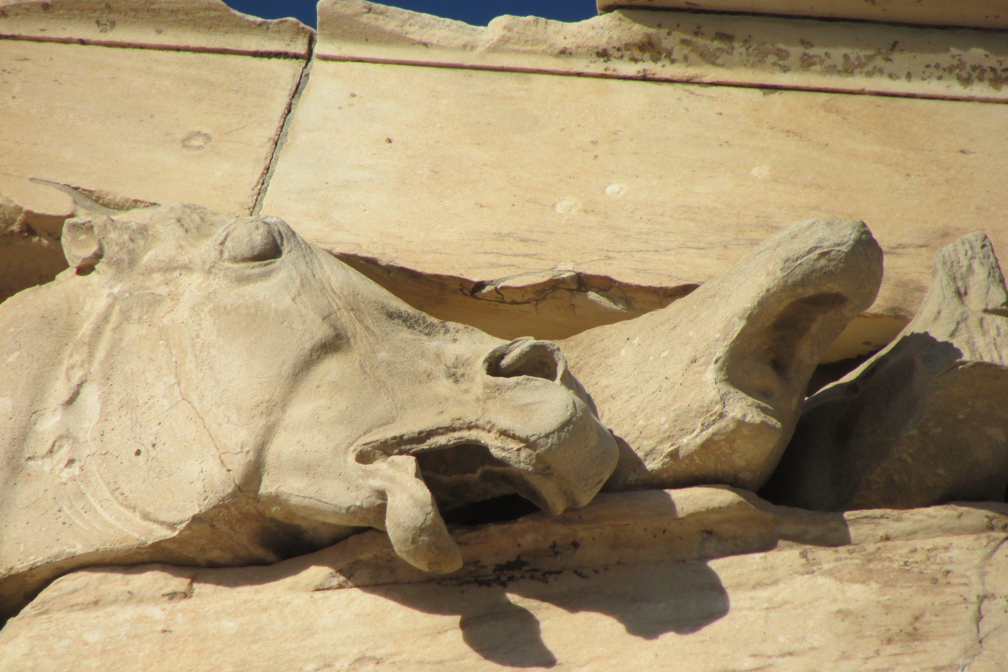 Gratis lagerfoto af antik, gammel, Grækenland, hest