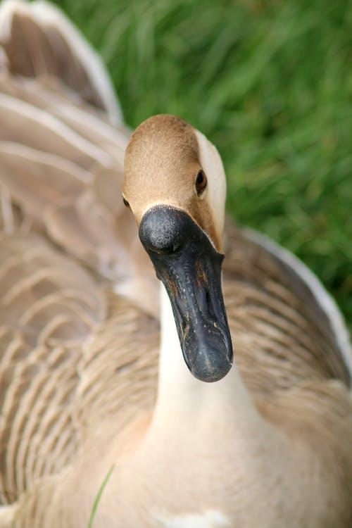 Fotos de stock gratuitas de granja, pájaro