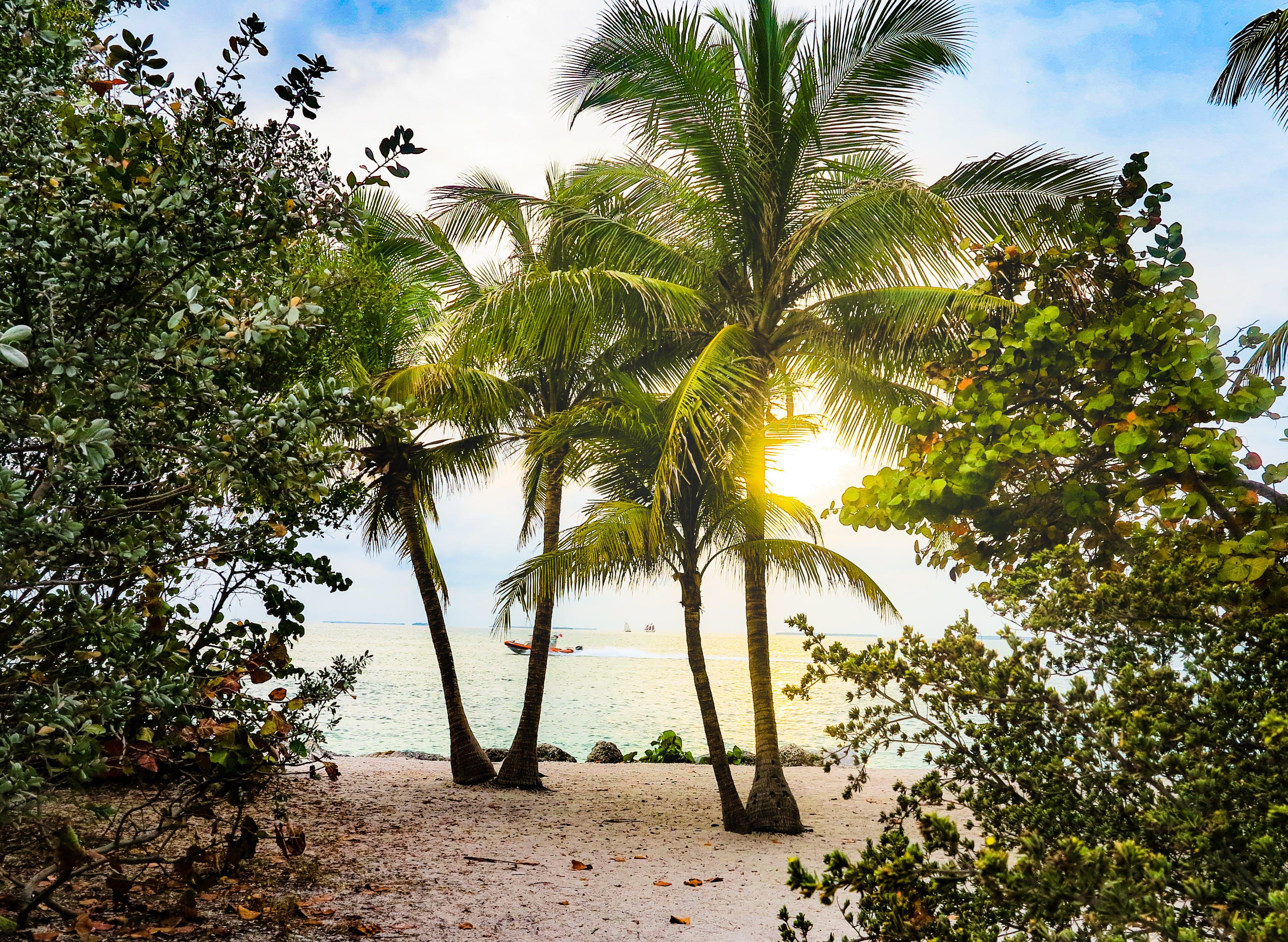 Δωρεάν στοκ φωτογραφιών με ακτή, δέντρα, δέντρα καρύδας, δυτικό κλειδί