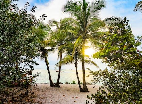 Darmowe zdjęcie z galerii z drzewa, drzewa kokosowe, floryda, klucz na zachód
